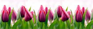 Фартук Тюльпаны 2,4м